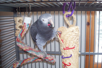 Homemade Toys For Parrots